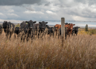 Conditions are drying and temperatures are warming in parts of the state, which means declining forage quality for cattle herds.